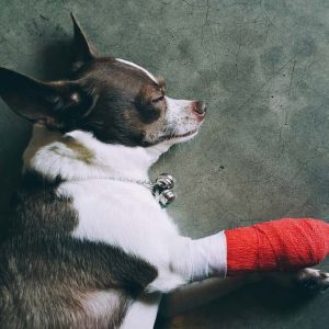 Cruciate Ligament Surgery in Dogs